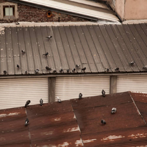Aubervilliers, France (2012) 18